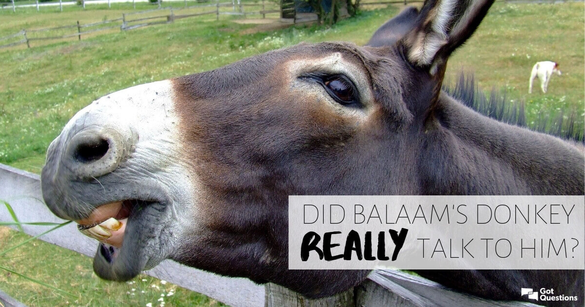 Did Balaam's donkey really talk to him? | GotQuestions org