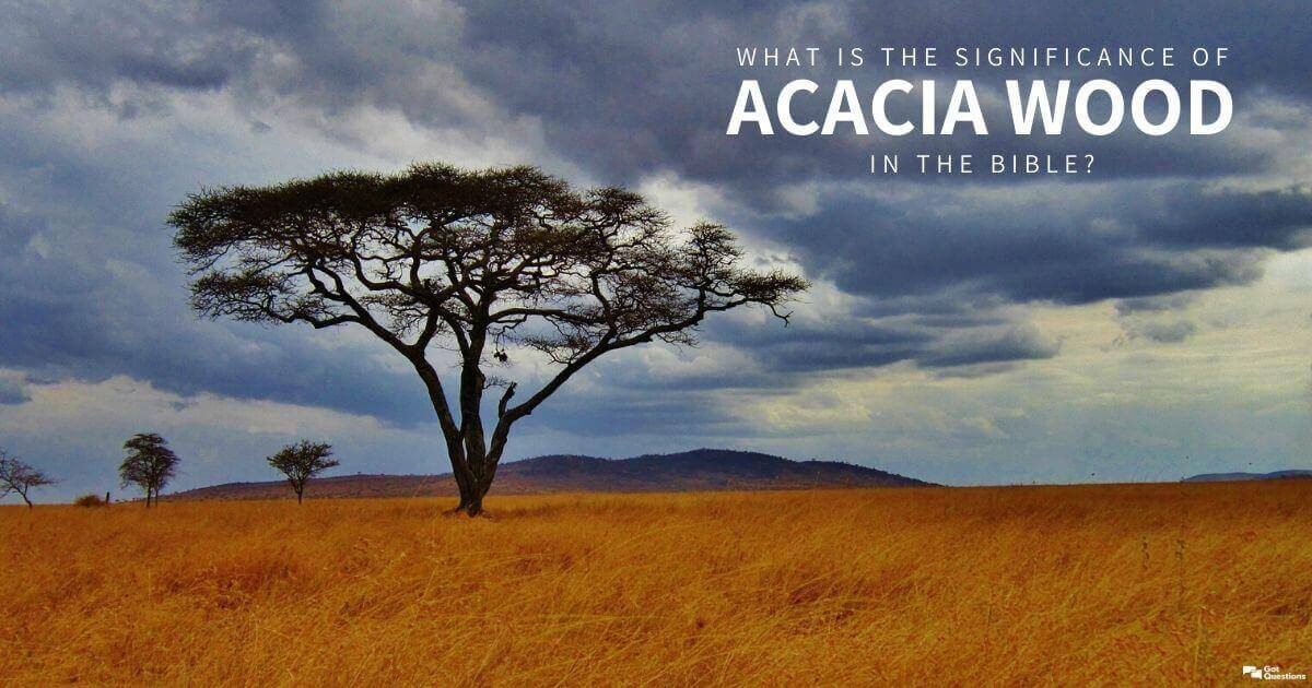 What Is The Significance Of Acacia Wood In The Bible