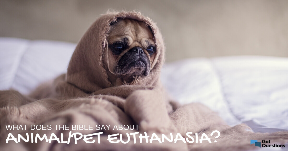 What does the Bible say about animal/pet euthanasia